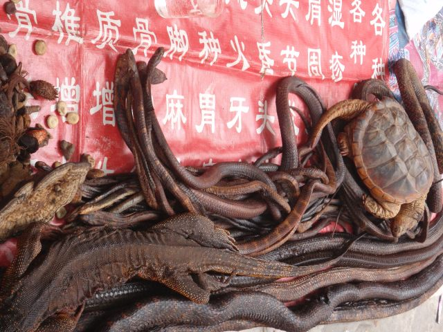 在市场有很多蛇,zài shìchǎng yǒu duō shé, at the market there are many snakes..... amongst other reptiles