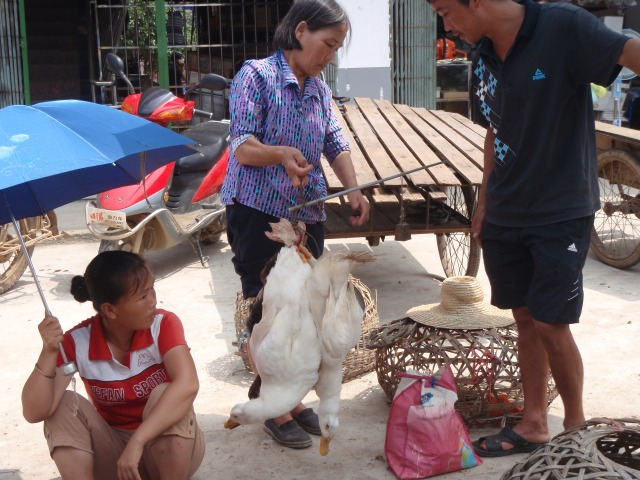 在市场有新鲜的鹅,zài shìchǎng yǒu xīnxiān de é, at the market there are fresh geese
