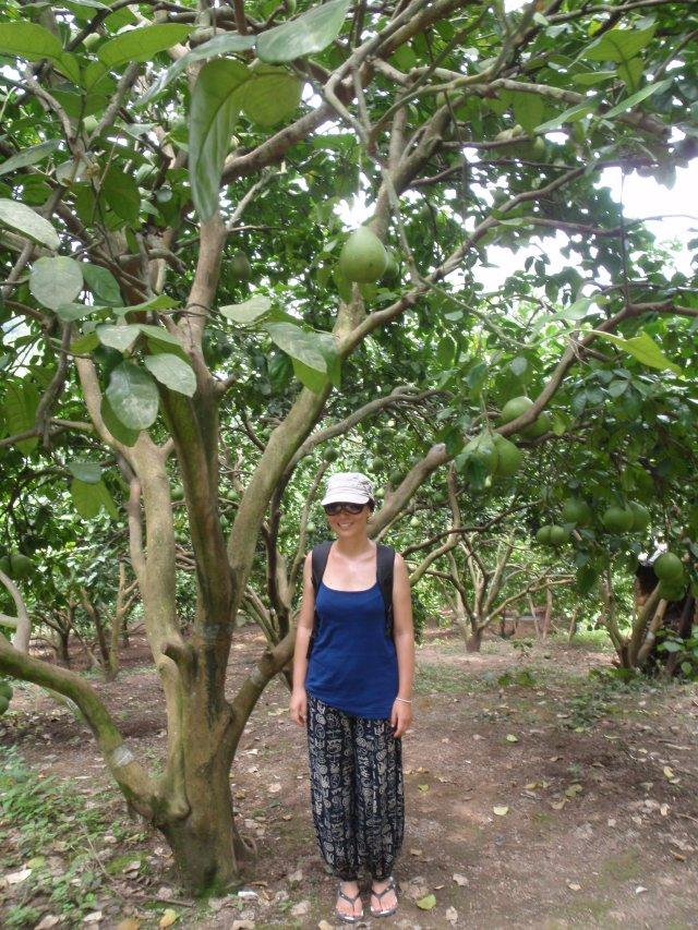 """我和香泡,wǒ hé xiāngpào, me and the """"Fragrant Bubble"""" Tree"""