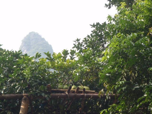 "香泡在休息,xiāngpào zài xiūxī, the ""Fragrant Bubbles"" resting upon the wooden shafts.... it's a hard life for the ""Fragrant Bubbles"""