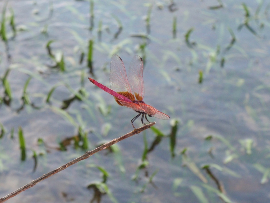 我真的喜欢粉红的颜色,wǒ zhēn de xǐhuān fěnhóng de yánsè, I really like the colour pink